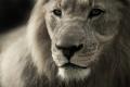 Разследват жестокост към лъва от зоокъта в Разград