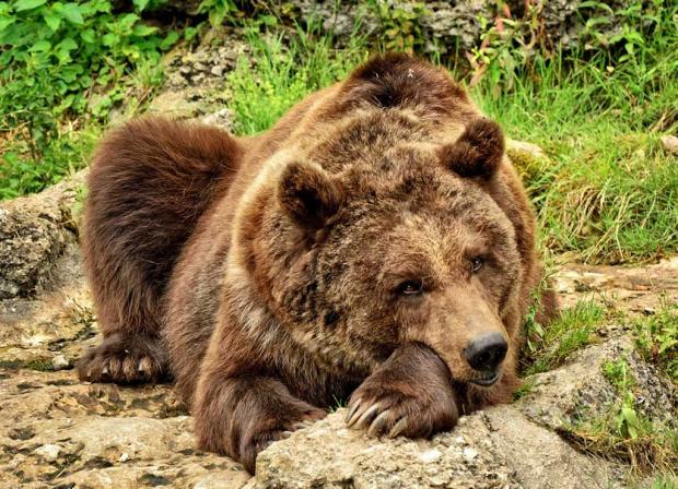 Мечка нападна и рани 47-годишен ловец от Казанлък. Мъжът е