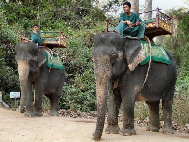 Ангкор Ват е най-известнататуристическаатракция вКамбоджа.След натиск от странанагрупите зазащитаправата на