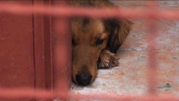 В Русия одобриха правила за отглеждането на животни