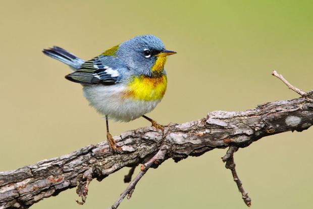 Изменението на климата води до промени при птиците – телата