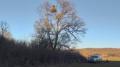 40 изкуствени гнезда поставиха за застрашения царски орел