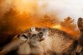 Пожарите в Австралия продължават да горят: Димът ще премине по цялото земно кълбо (ВИДЕО)