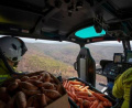Спасяват австралийските животни като хвърлят храна от самолети