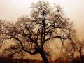 Разкриха тайната на многовековните дървета