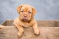 Зелено кученце се роди в Северна Каролина и изненада американско семейство