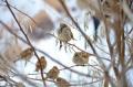 За животните с любов: Мъж спаси замръзнало врабче (ВИДЕО)