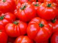 Цакат ли ни е био храните? Отново намериха пестициди в биодомати