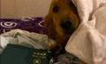 Как кучето Кими спаси собственика си от пътуване до Китай?