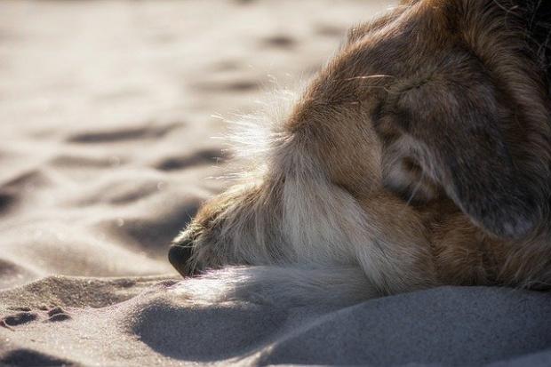 Анка, обесила кучето си на дърво в Раковски: Стана ми много мъчно