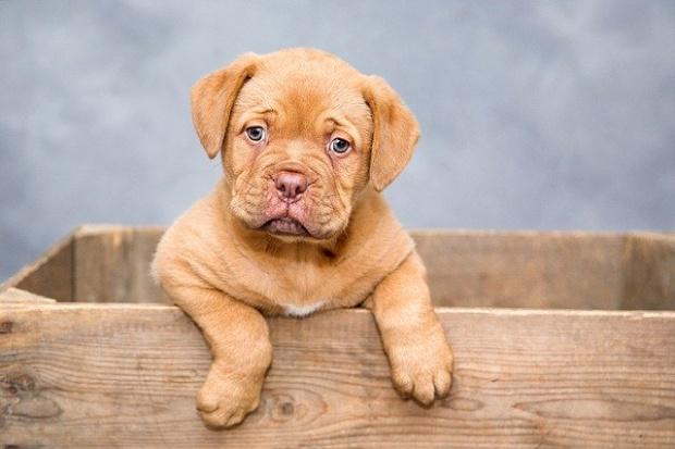 Зелено кученце се роди в Северна Каролина и изненада американско
