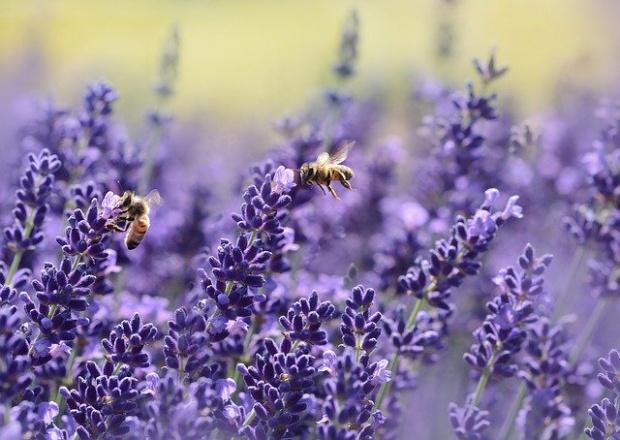 Пчелата - най-важното живо същество на планетата