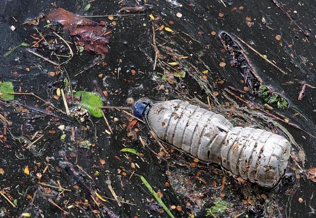 Опаковки от стари пестициди са отровили рибата в Марица. Не