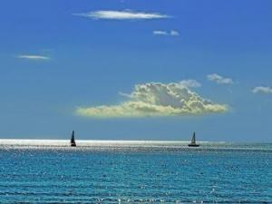 Черно море може да помътнее заради кафявите водорасли