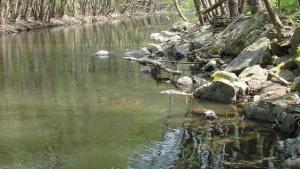 Пак замърсяване на реките Юговска и Чепеларска