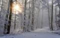 Продължава да вали сняг температури ще бъдат между минус 1° и 4°
