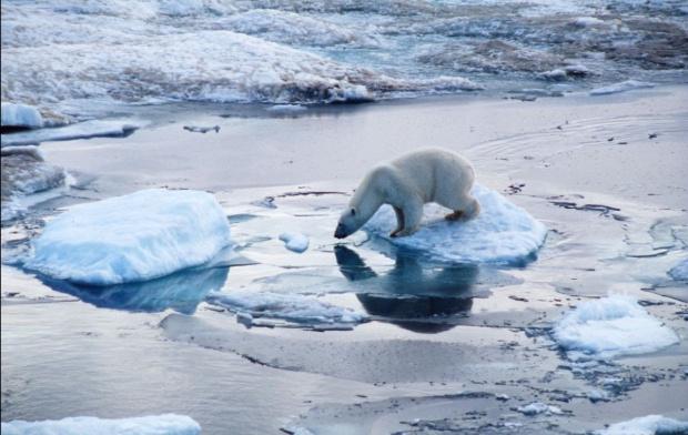 Доклад на WWF посочва за първи път страните, чиито икономики