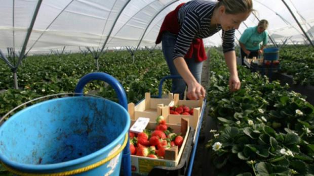 Плодовете и зеленчуците ще се изчерпат, ако британски чартърни самолети