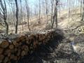 (СНИМКИ) Нарушител на мерките се натъкна на стряскащи гледки в гората