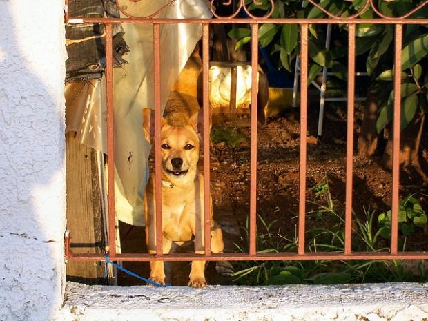Китайският град Шънчжън забрани продажбата и яденето на диви животни