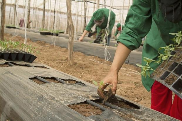 Земеделските кооперации в община Павликени са изпратили запитване до земеделското