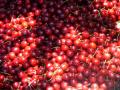Ченгетата в Кюстендилско започват да пазят реколтата от крадци