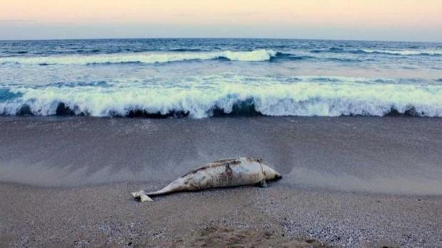 Два трупа на делфини са намерени на плажове на север