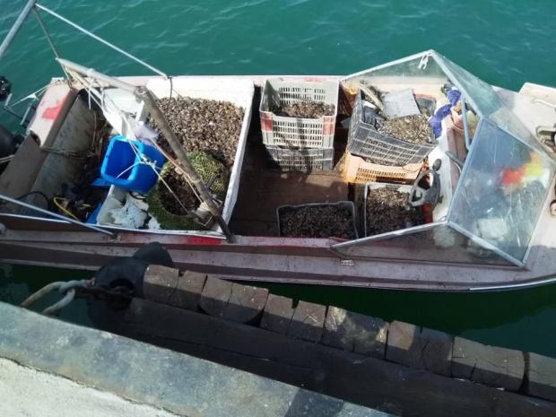 Спипаха двама бракониери на Морска гара в Бургас със 120 кила черна мида