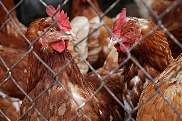 Българска агенция по безопасност на храните (БАБХ) констатира огнище на