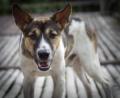 30 кучета са нагъчкани в двор в Бояна, вият и се самоизяждат