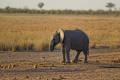 Кааван, най-самотният слон в света, най-накрая ще бъде пуснат на свобода