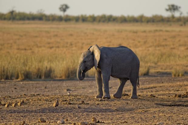 В продължение на десетилетия най-самотният слон в света забавлява тълпи