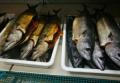 Преди Никулден: Хайки на инспектори в магазините и обектите, където продават риба