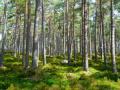 Държавните предприятия инвестираха над 1,1 млн. лв. за закупуване на частни горски имоти през 2020 г.
