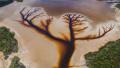 Зрелищно откритие: Езеро в Австралия прилича удивително на Дървото на живота (СНИМКА)