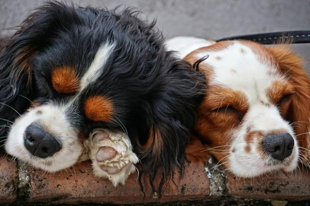 Британски и американски учени допускат, че и на домашните животни