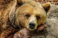 Снимат филм за мечката Пабло Ескобар, починала от кокаин