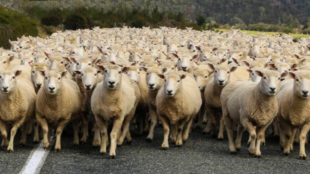 Преброяването на земеделските стопанства доказва твърдението на браншовата асоциация на
