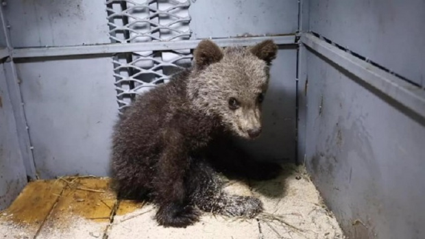 Трето мече пристигна в парка за танцуващи мечки в Белица.