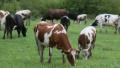 Министър Бозуков: Констатирани са множество виртуални животни във фермите