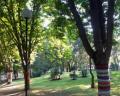 "Доброволци ""облякоха"" дървета в бургаски парк"