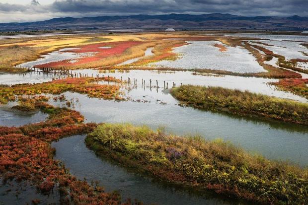 Екокатастрофа заплашва Атанасовското езеро, алармират природозащитници