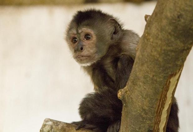 Случай на маймунска шарка в САЩ