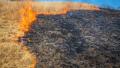 Пламъците в гората край Сандански взеха жертви