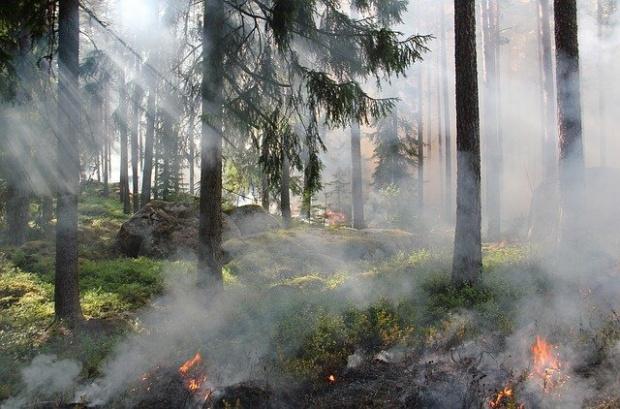 Горски пожар бушува в Кюстендилско