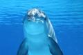 Ловът на делфини, който потресе света (СНИМКИ/ВИДЕО)
