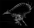 Изневярата и как различните зодии подхождат към нея